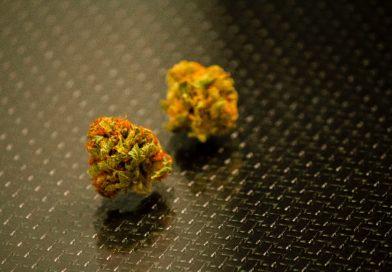Y tú… ¿estás a favor del uso de la marihuana?